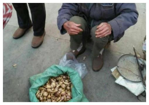 大爷街边卖稀罕菜,路人围观却不买,识货的大叔花50元全包圆