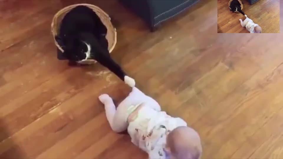 家里萌娃和一只萌猫是怎么的感觉猫最恐怖的生物是小孩