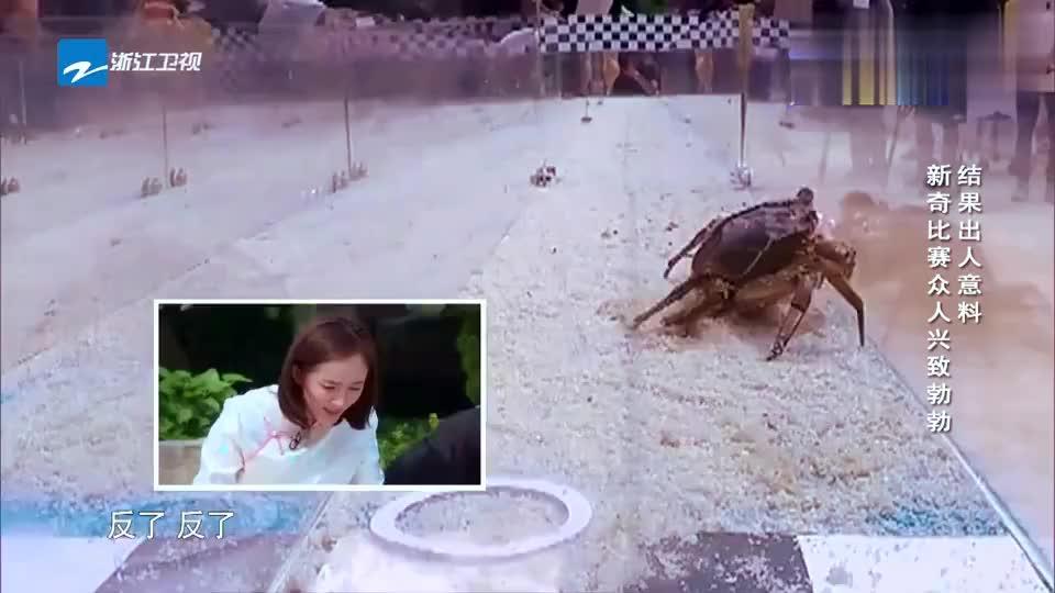 跑男团用螃蟹赛跑李晨大喊它停住了陈赫这话接得好搞笑