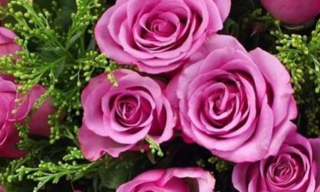 """喜欢菊花,不如养""""高端玫瑰""""冷美人,冷艳如美人,高冷独特"""