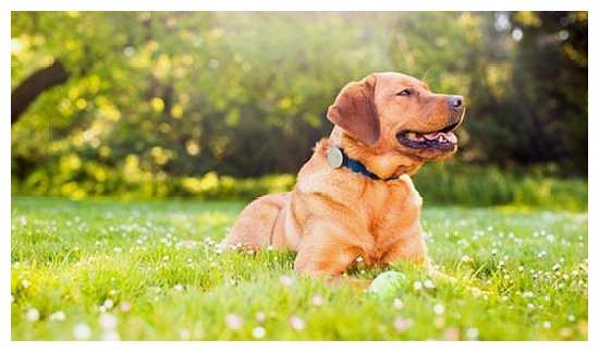 狗狗脖子被项圈卡住而濒临死亡,无法想象它都经历了什么!