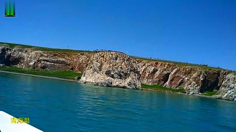 青海湖鸟岛,一定要去的地方,每年6-7月去鸟最多!