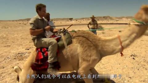野外惊现无头骆驼游客当场傻眼转身的那一刻都不淡定了