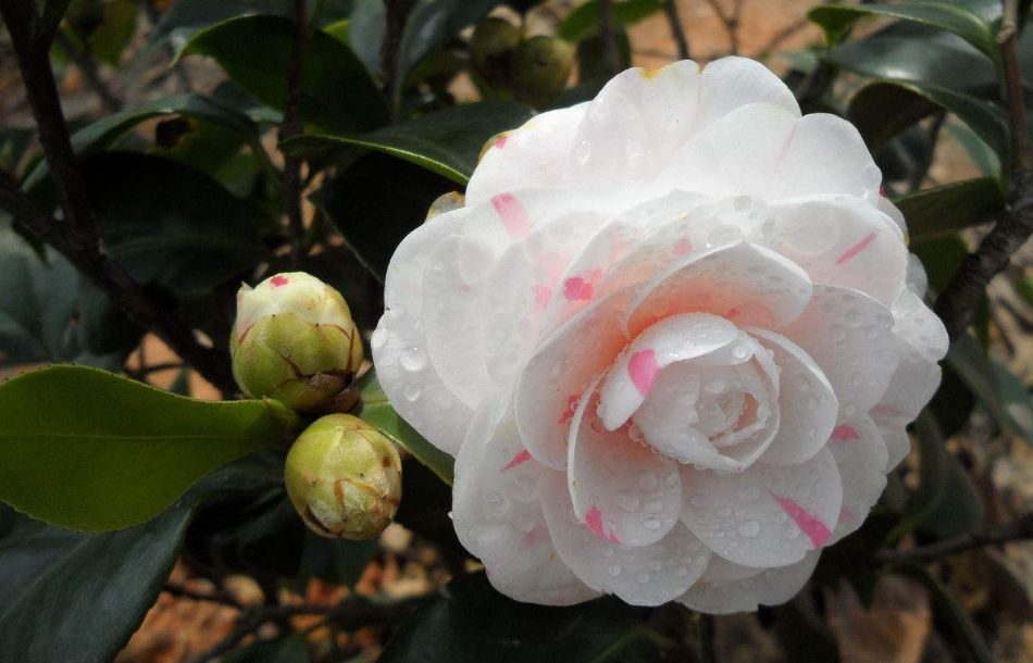 今天是二十四节气里的霜降,你知道现在还有哪些花在盛开吗?