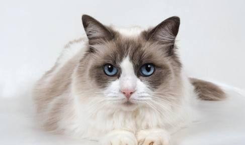 最适合十二星座养的宠物:水瓶座的最美,金牛座的最可爱!