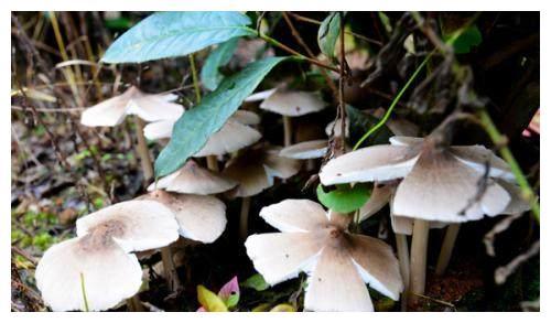 纯天然6种野生菌类食品,你认识几种,都认识的全是大神