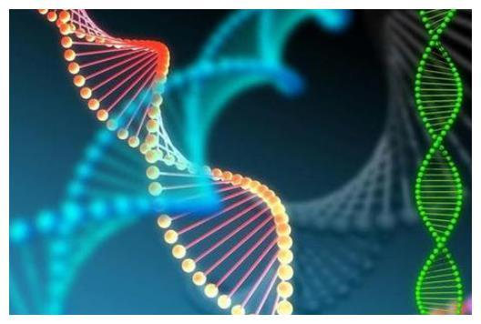 未来男人会消失?Y染色体正在变形,科学家担忧出现新型人种
