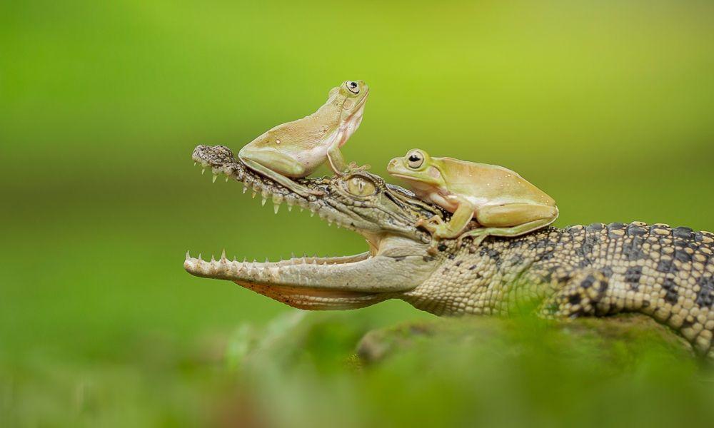 印尼微距摄影师用镜头描绘了他对自然和微距世界的热爱,你怎么看