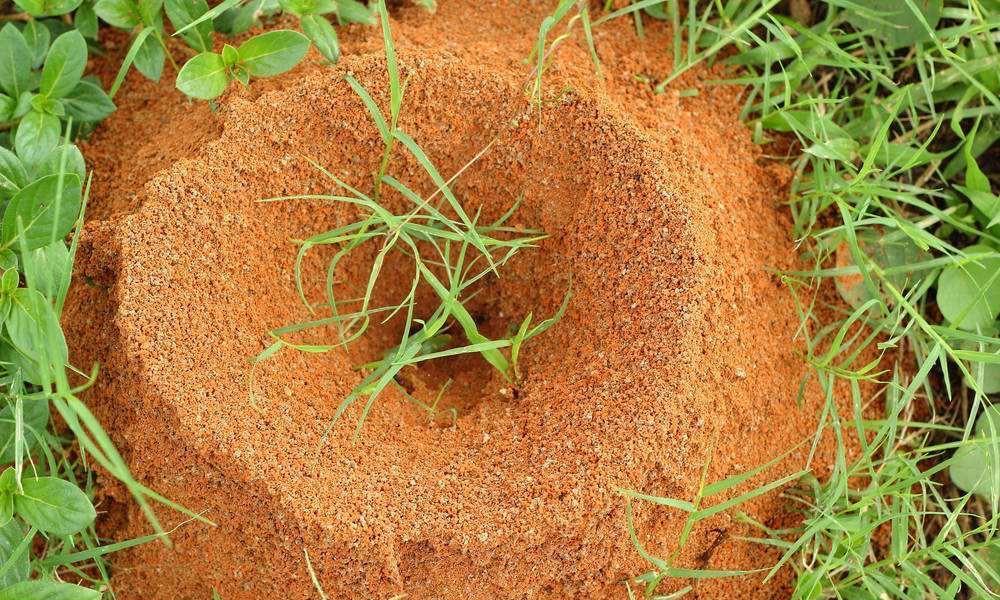 蚂蚁洞旁边的土堆哪里来的?那是蚂蚁劳动一生的证明