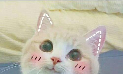 GIF趣图:妹子是吃火锅也能中毒,直接举着白纸想男友投降了?