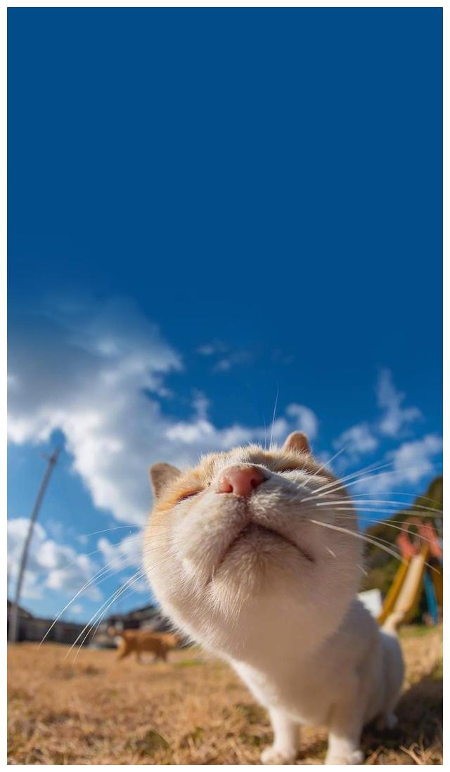 猫咪壁纸丨清新系猫咪壁纸,一起来吸猫
