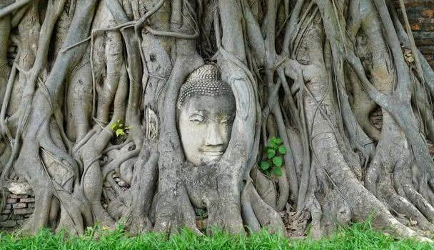 奇观!国内一千年古树内藏着一尊佛像,来历不明却吸引无数游客!
