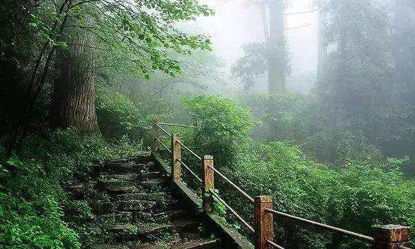 《雨中的天目山》,自己做的小诗,记一次天目山游玩