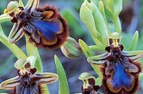 """一生难见一次的奇花:图1闻所未闻,图2被称为""""死亡之花"""""""
