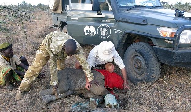 肯尼亚小象掉入偷猎者陷阱,腿部被割皮开肉绽