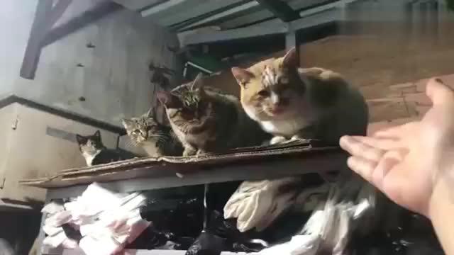 萌宠虽然是流浪猫但不要太粘人哦