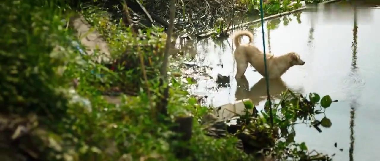 湄公河行动:大妈正在河边洗衣服,13具腐尸突然出现,触目惊心!