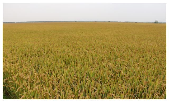 四川在全国率先开展农机化综合奖补试点(附名单)