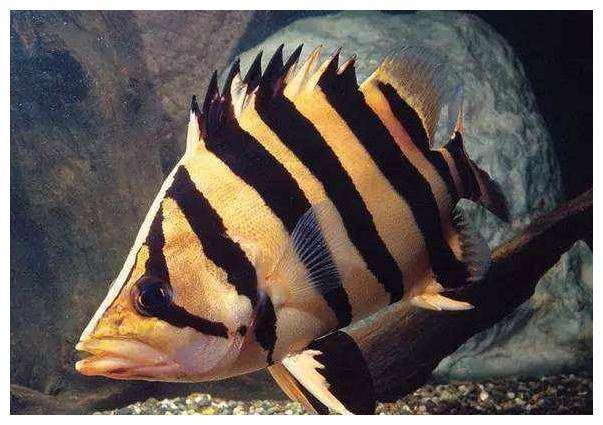 观赏鱼蒙眼怎么办?鱼缸观赏鱼蒙眼治疗预防全攻略,及病因分析