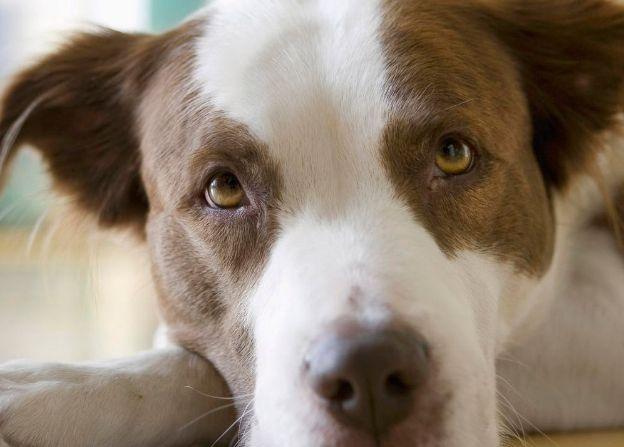 美图:各种各样萌狗图片,你喜欢狗狗吗?