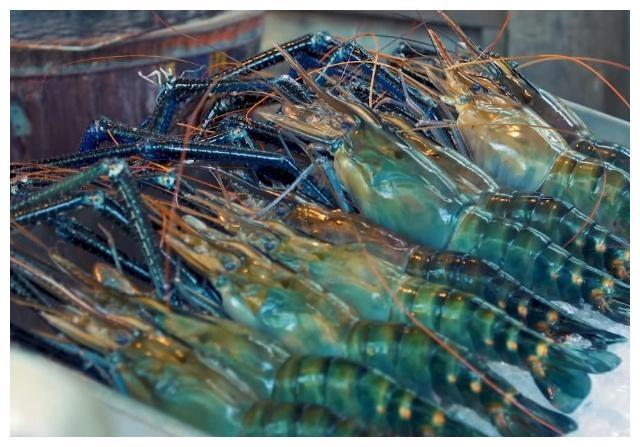 这种虾比手臂都粗,当地人不屑吃它,导致泛滥成灾,有人认得吗?