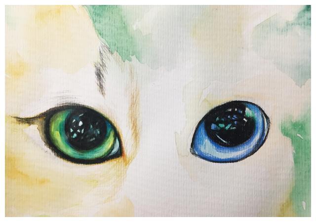 猫咪彩铅手绘过程图讲解