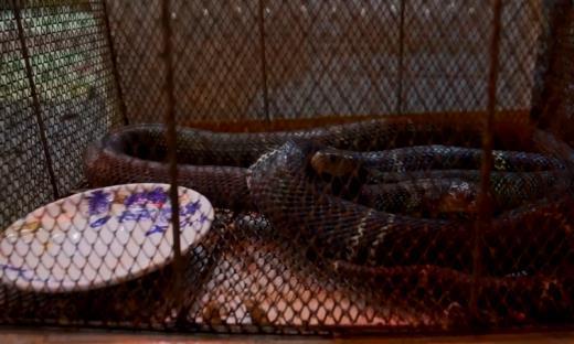 番禺一家老字号,三代人专业做蛇肉,没想到老板小孩把蛇当玩具?