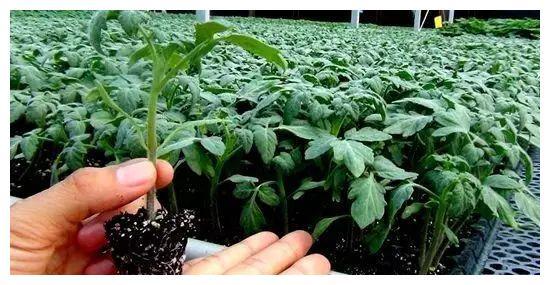 移植前,先跟植物沟通好,请它们做好准备