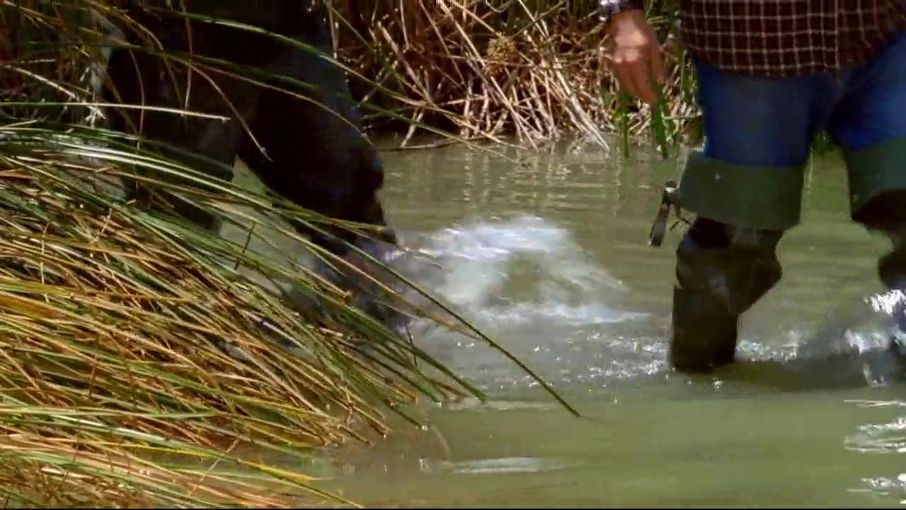 警察与猎手打坏猛蛇蛋,遭到梦蛇突然袭击,猎手被猛蛇缠住