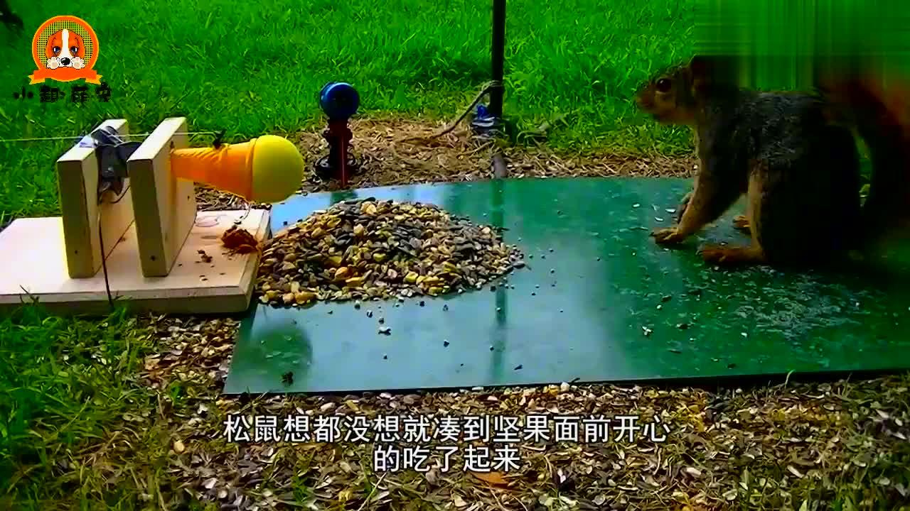 小松鼠趁着天气好,居然把被子拿出来晒,搞笑