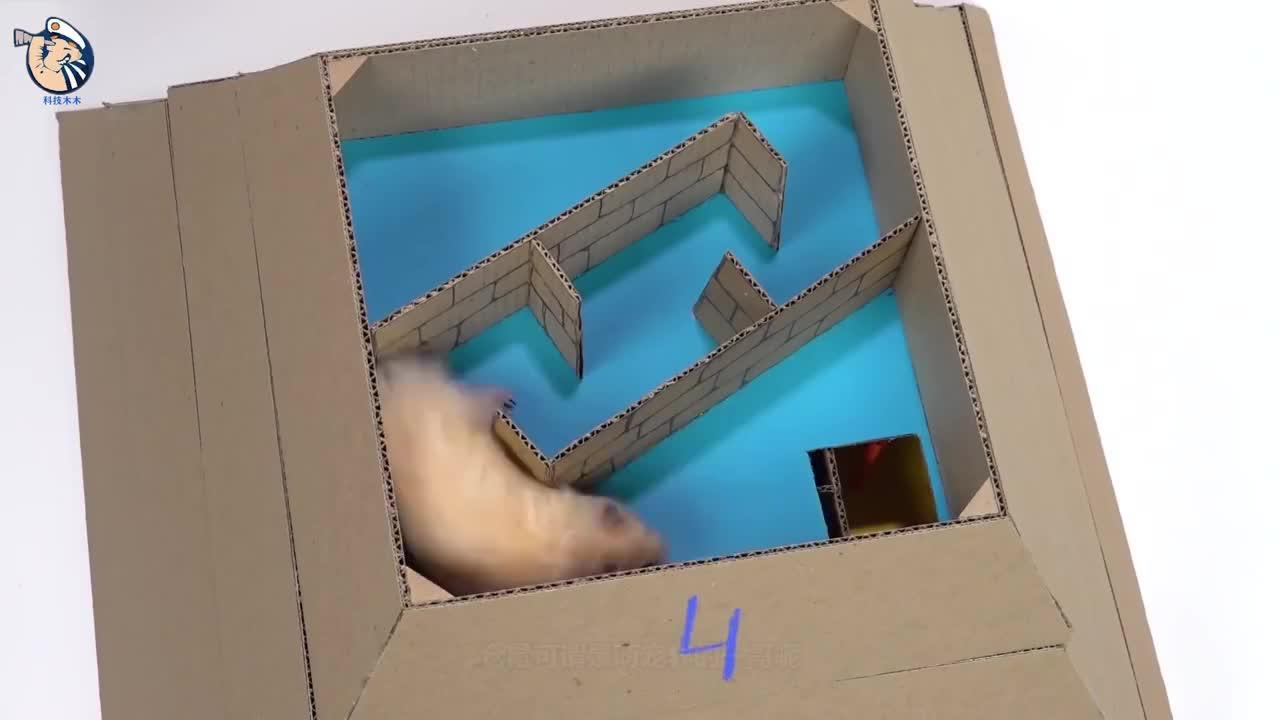 小伙给仓鼠设计6层金字塔迷宫它能顺利逃脱吗一起来见识下