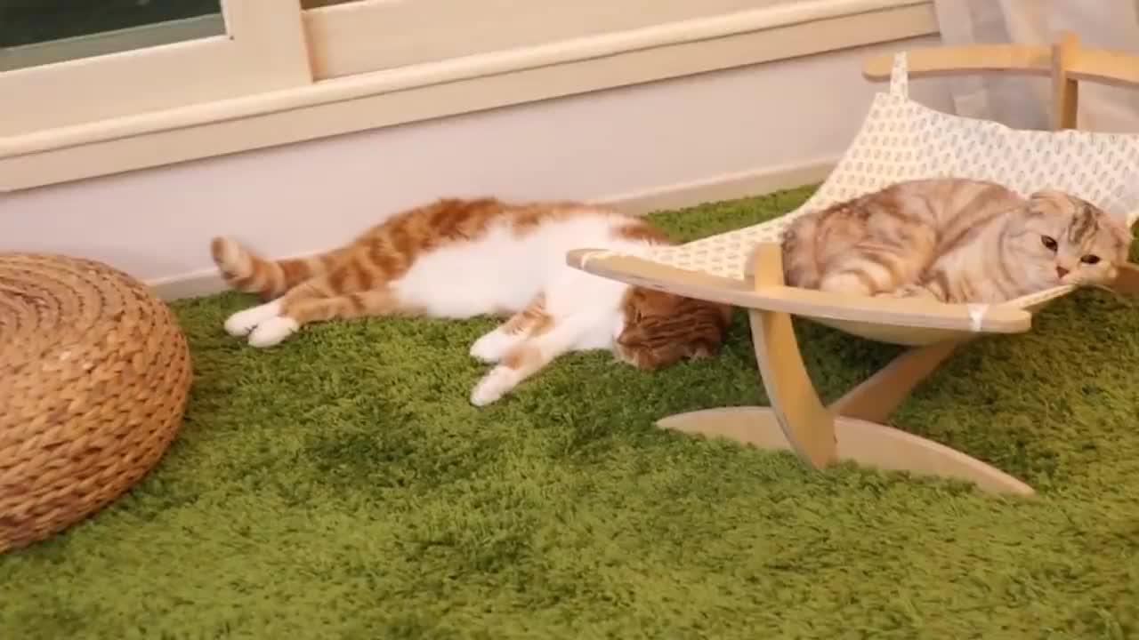萌宠一家亲新手养猫指南猫咪的足部应该如何护理