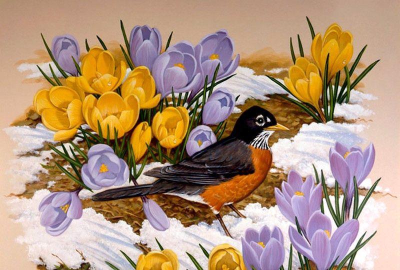 看他的画能听见鸟鸣:英国绘鸟大师约翰·弗兰奇·斯隆作品选