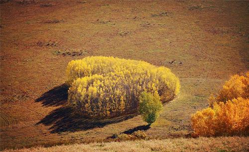 一生一定要去一次秋天的呼伦贝尔大草原,一动一景,一步一天堂
