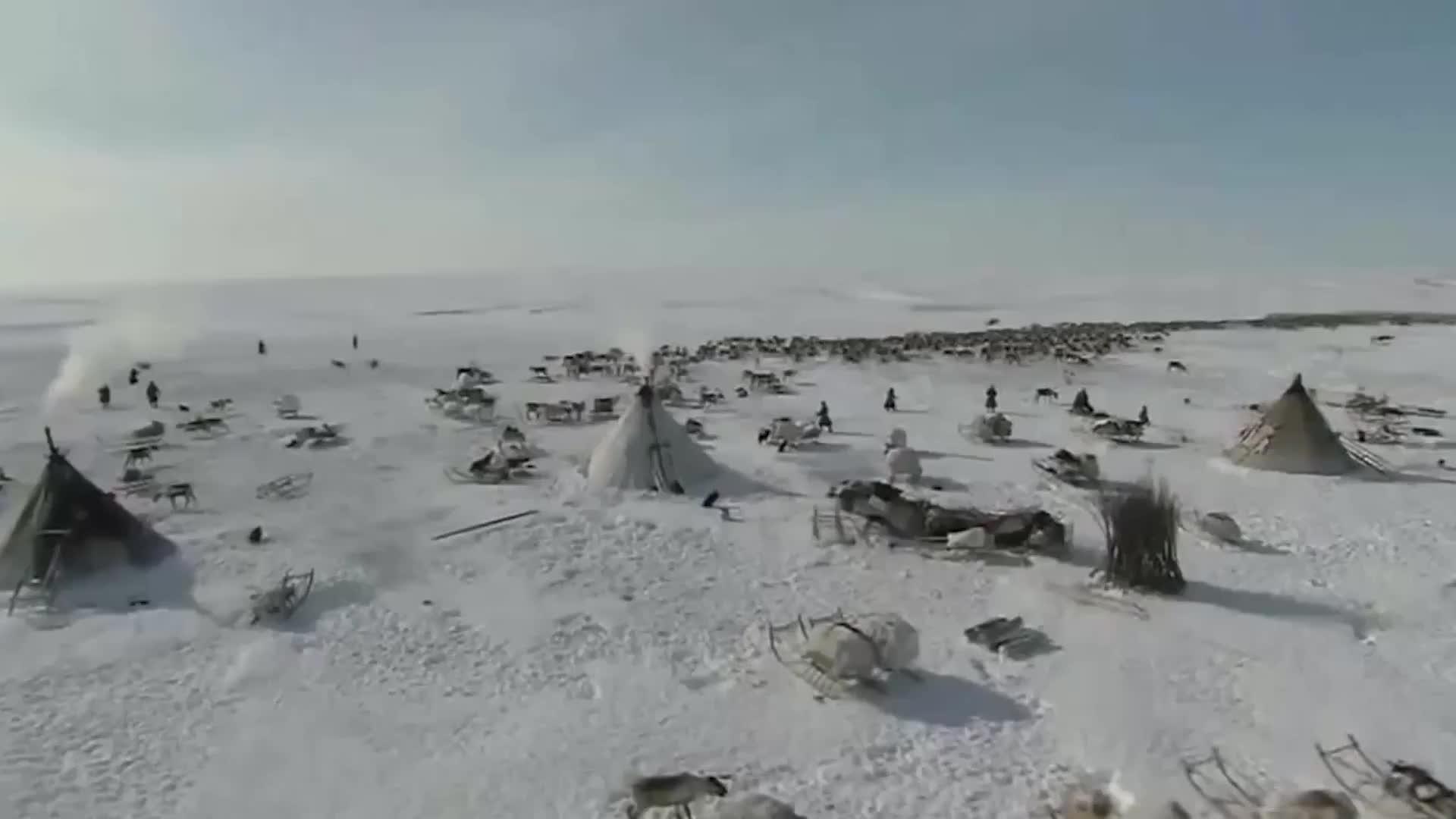 北极圈因纽特人吃海豹,就像吃白米饭,一般人都不敢相信
