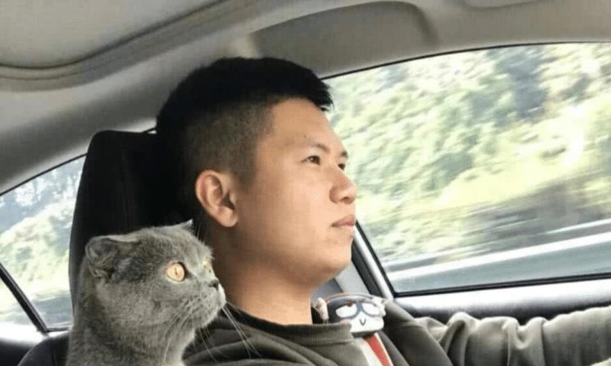 宠主正在开车,猫咪突然伸爪搭肩,有谁注意到后座猫的表情