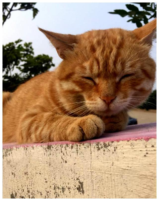 橘猫正在喂奶,总感觉小奶猫有点不对劲,转头一看,直接炸毛了