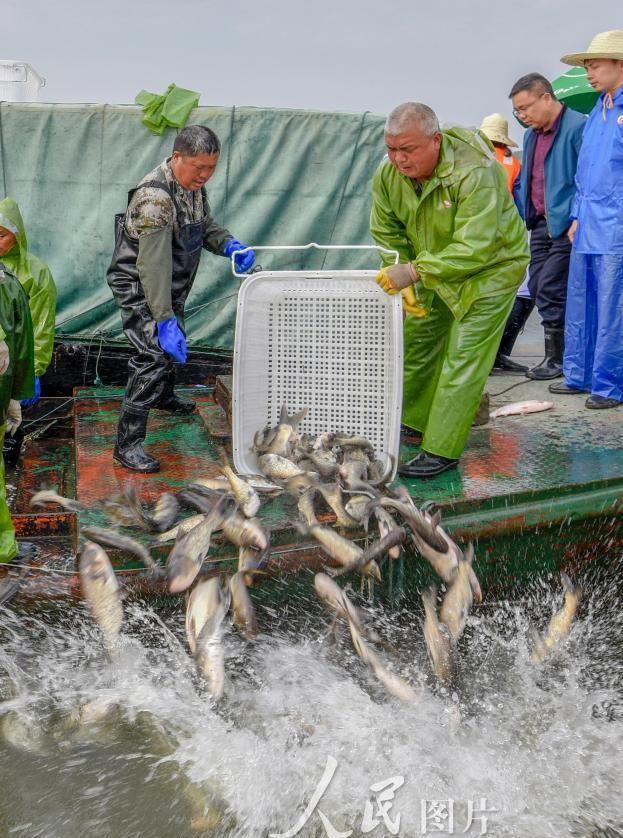 江西新余:仙女湖增殖放流 保渔业生态平衡
