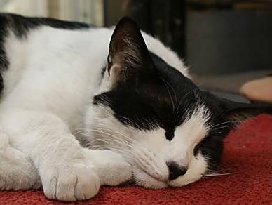 涨知识哦,猫爪除了软萌还大有用处,关于猫爪的小知识你知道吗