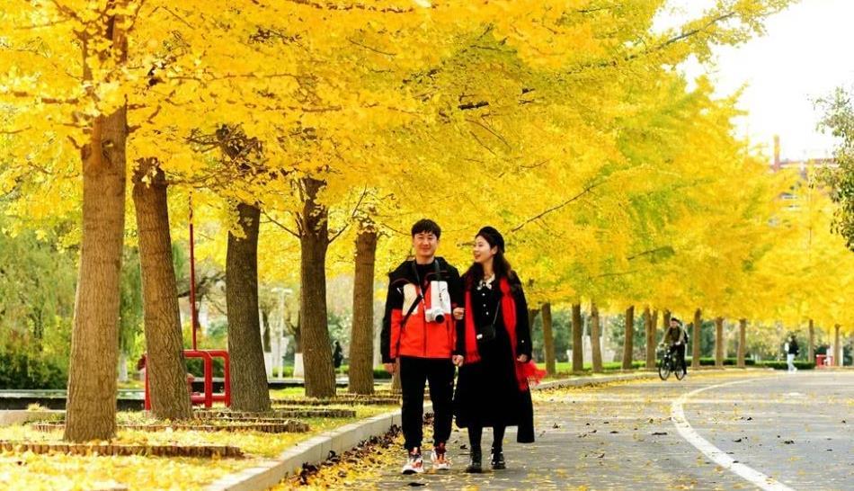 初冬时节,银杏黄海棠红,在青岛的山东科技大学把自己美成诗