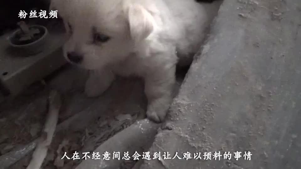 流浪小奶狗悄悄跟女孩回家晚上躲在地下室里小家伙太有心机了