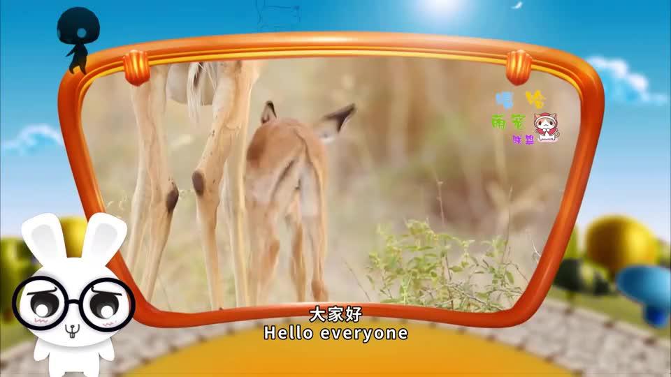 闪电豹子锁喉羚羊羚羊灵机一动将猎豹反杀