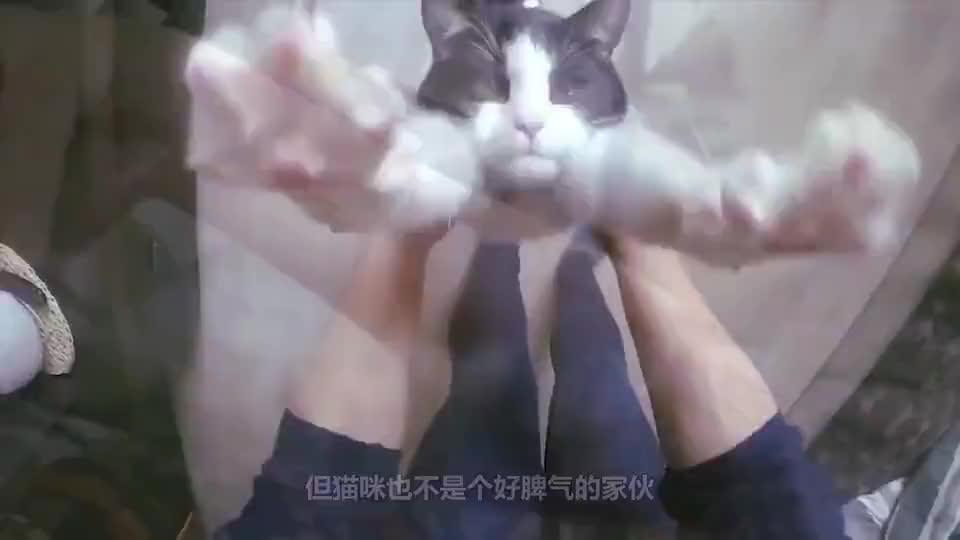 动物奇趣铲屎官家的猫一听到这个音乐就在他面前跪下简直不可思议
