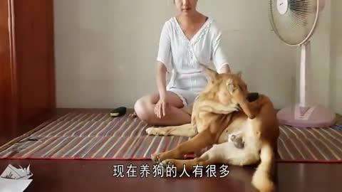 为什么单身女性都喜欢养只公狗,原来是有这几个原因,太逗了