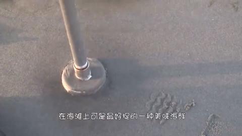 在蛤蜊的周围撒一层盐猜猜结果会怎样镜头拍下了全过程