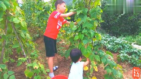 孩子放学后去菜园摘菜,哥哥很能干妹妹也懂事,看到最后很暖心!