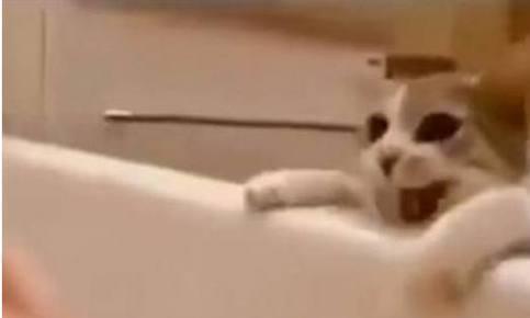主人为了测试猫咪,假装浴缸洗澡溺水,随后猫咪的举动让她哭了!