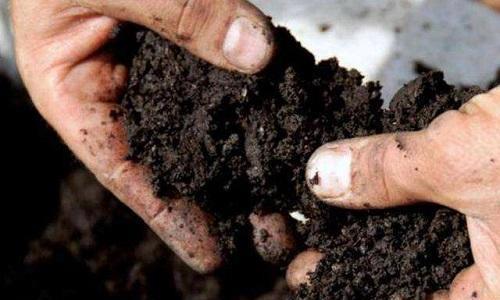 换下来的旧土别扔了,再加上3种自制花肥,重新有肥力养啥花都旺