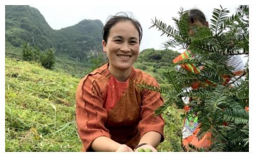 务川:石朝万亩香榧大丰收 564户村民股东参与分红