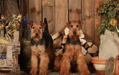 """它们是忠诚的伙伴,""""治愈系""""的宠物狗狗,狗狗也是小萌物"""
